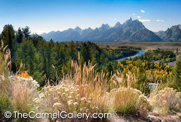Wild Grass and Tetons
