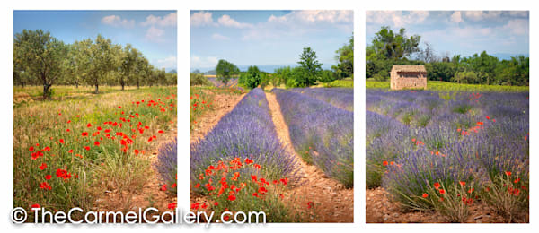 Flowered Fields Provence ALL