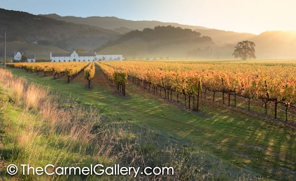 Golden Sunrise Napa