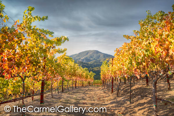 Mt St Helena Autumn