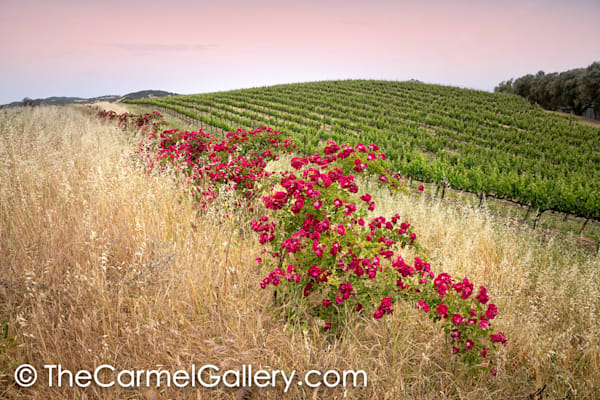 Wild Rose Wine Country