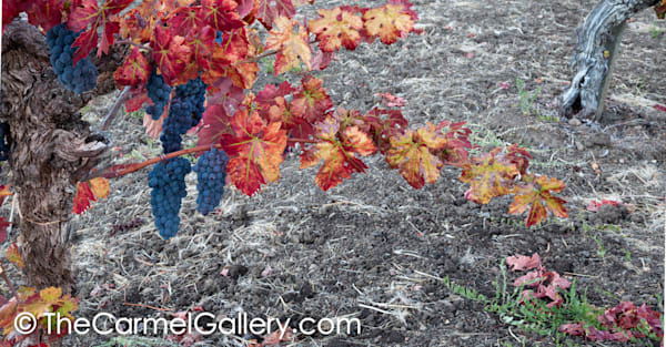Turning to Fall Wine Country