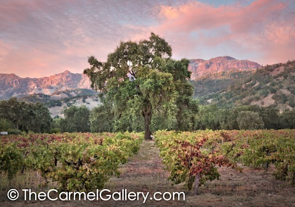September Evening Calistoga