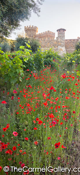 Red Poppies Castello di Amorosa