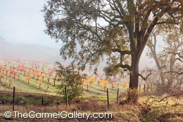 Quiet Vineyard Morning