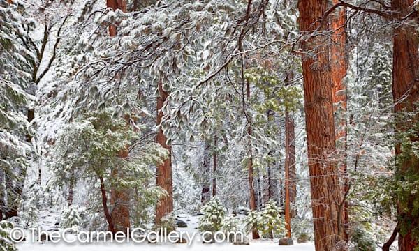 First Snow High Sierra
