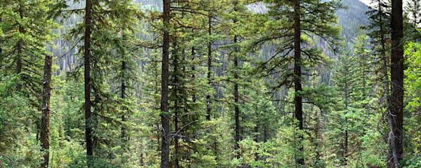 Glacier National Park .cb