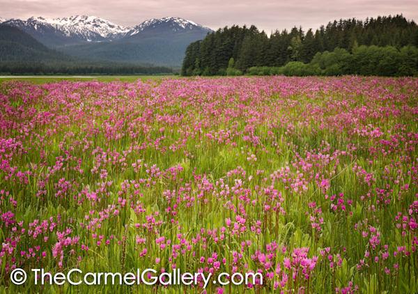 Shooting Star Meadow, Juneau