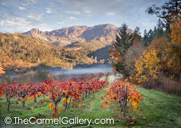 Autumn in Calistoga