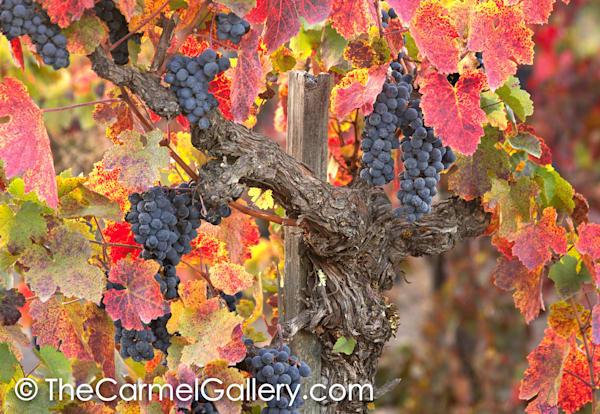 Wild Vines Wine Country