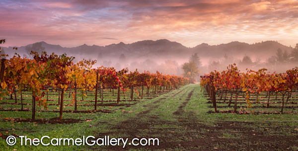 Autumn Sunrise Calistoga