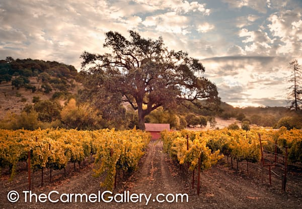 Golden Morning Wine Country