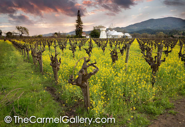 April Showers Napa Valley
