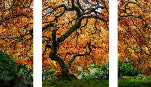 Tree of Zen captured at the Portland Japanese Garden