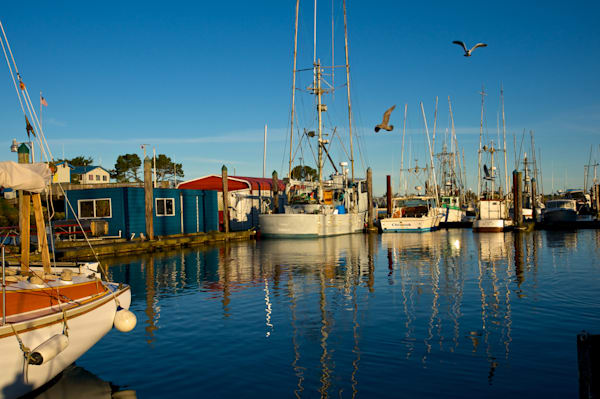 Fishing boats and gulls in Charleston, Oregon.