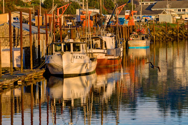 Soft Afternoon Light on Fishing Boats in Newport, Prints