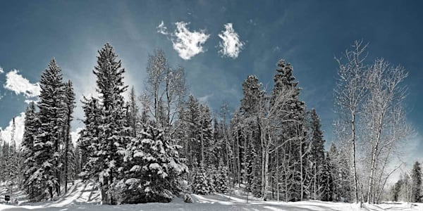 Snow Forest Photography Art | DE LA Gallery
