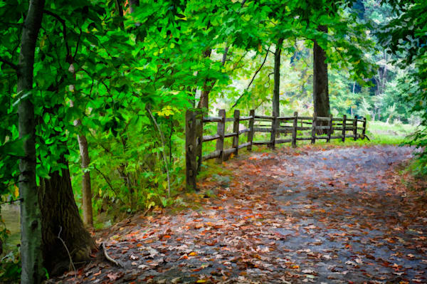 Laurels Pathway Fine Art Photograph | JustBob Images