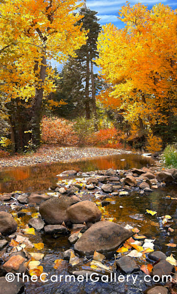Blackwood Creek Autumn