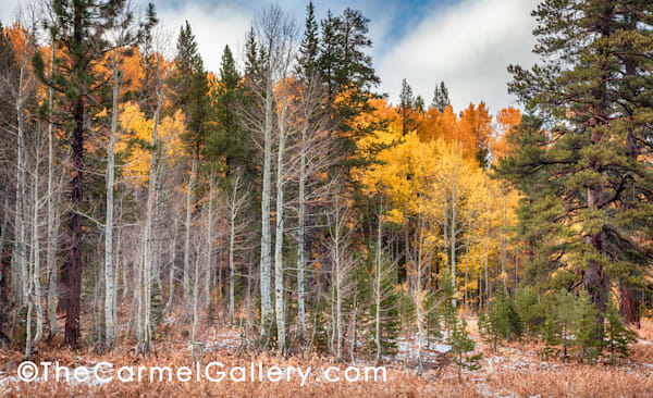 Bear Meadows Aspen Art | The Carmel Gallery