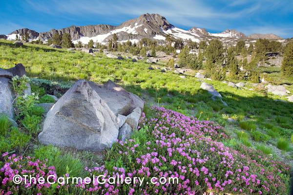 Carson Pass Wildflowers Art | The Carmel Gallery