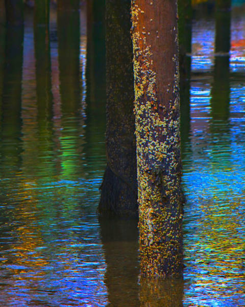 Under the Pier by John Feiser a photographer.