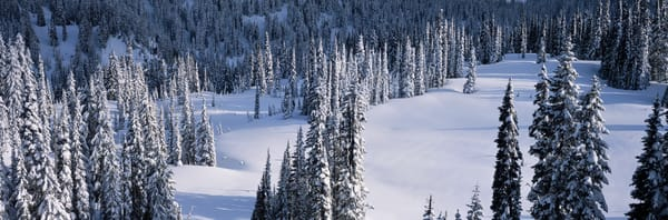 Fine art print of snow covered trees and a meadow, Mt. Rainier National Park, Washington