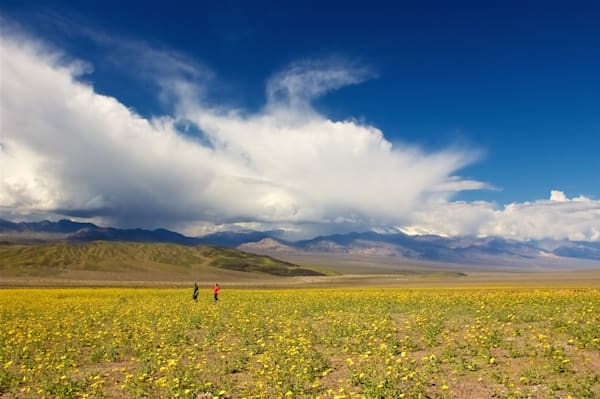 The Amazing Death Valley Bloom from 2005.