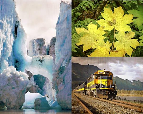 10x8 Birch Collage