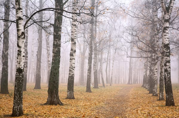 Autumn Trails - DPC_74122790