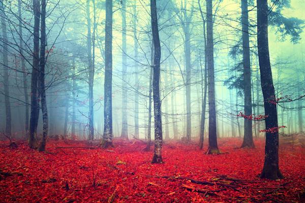 Fantasy Forest - DPC_69807278