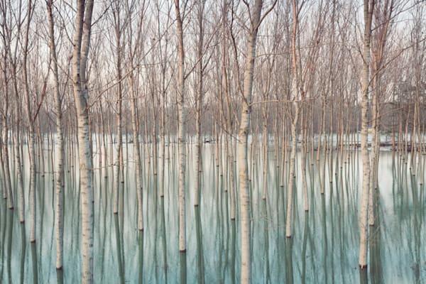 Birch Reflections - DPC_75750212