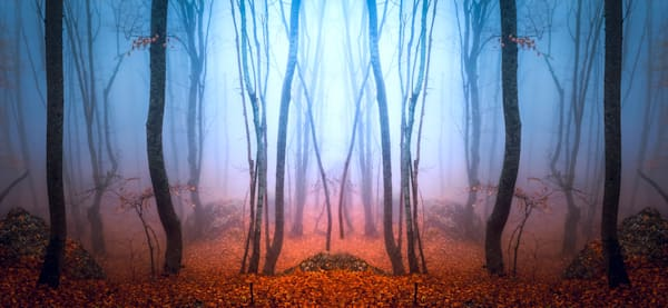 Forest of Dreams - DPC_94751107
