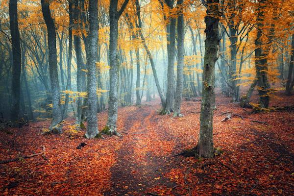 Mysterious Pathways - DPC_94531243