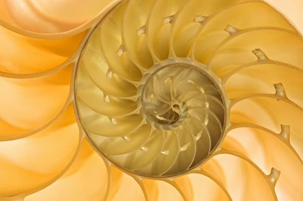 Nautilus Shell I - DPC_6269280