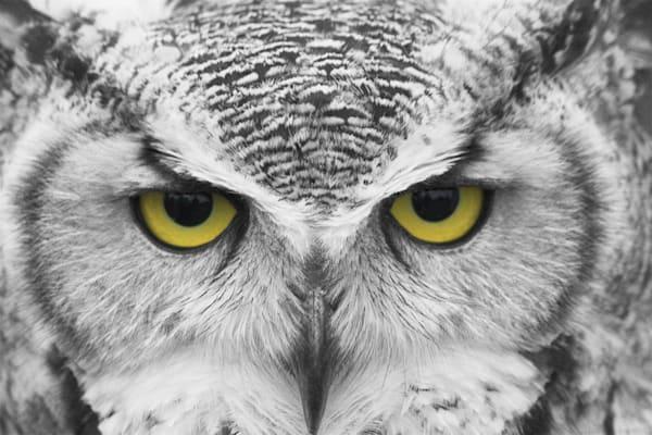 The stare - DPC_2402227