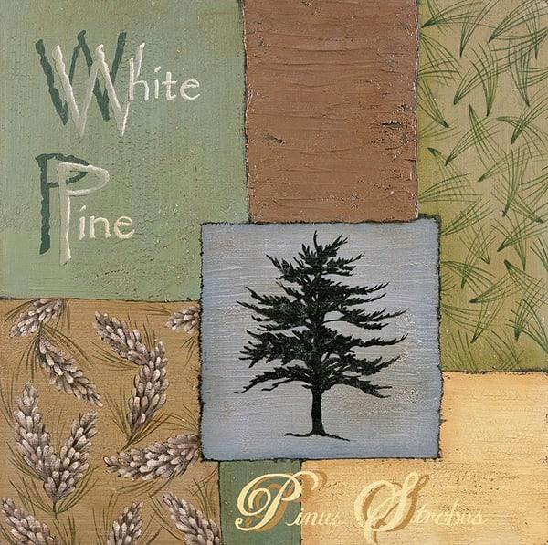 White Pine - AL-SUSCLI58604