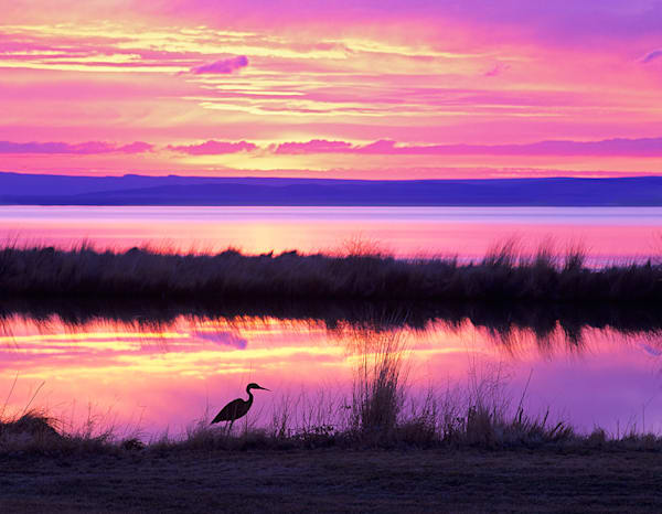 Sunrise Heron