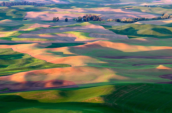 Rolling Wheat Hills Art | Fine Art New Mexico