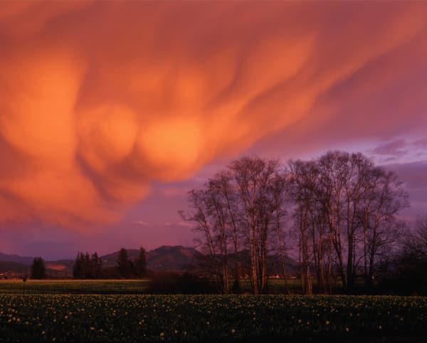 Mammatus clouds in the evening light, Skagit Valley, Washington