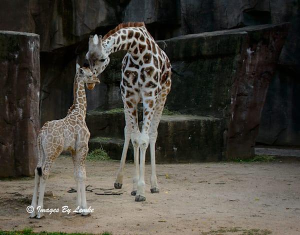 Mom Ziggy with Son Tafari.