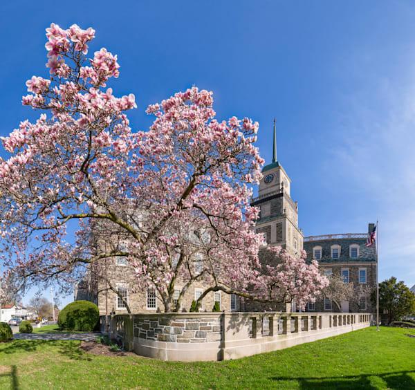 Page Park Flowering Tree