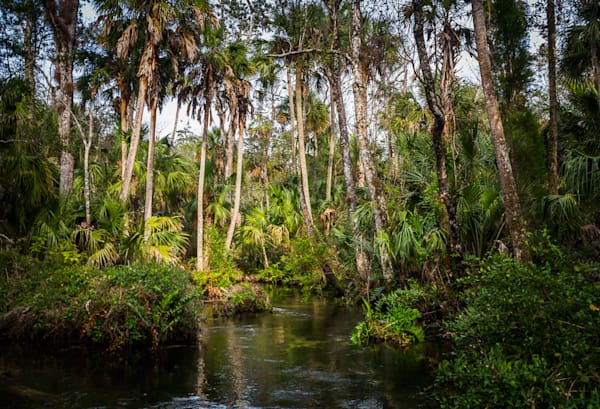 Chassahowitzka River, Florida, Landscape, Photography, Springs