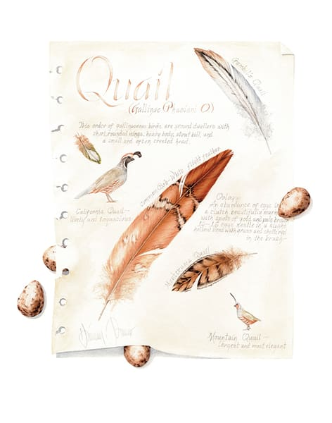 Quail Journal Page