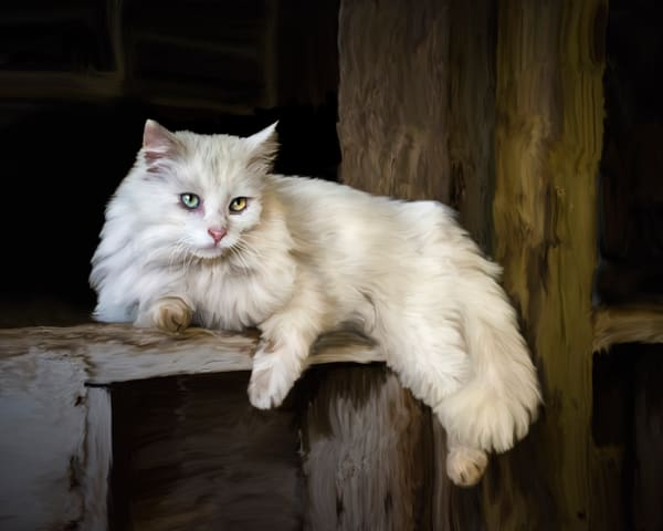 White barn cat