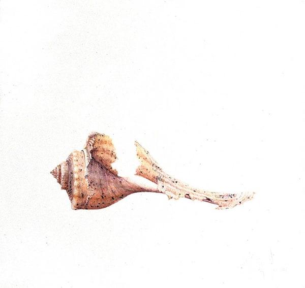 Channeled Whelk Shell Art | Hillary Parker Watercolors