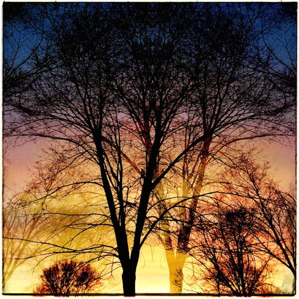 Magical Trees At Sunset Art | photographicsart