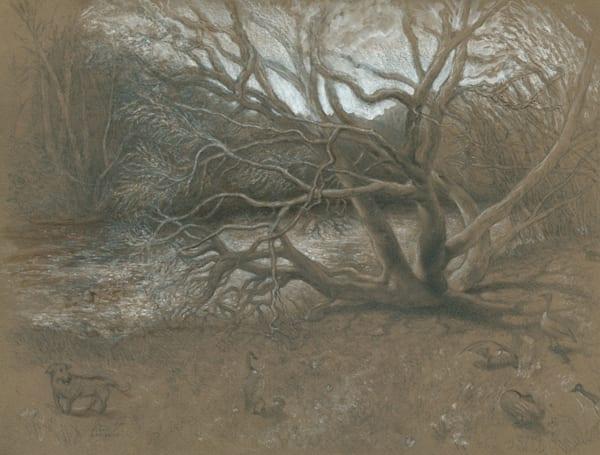 Catawba Tree in March - Original Drawing for Sale - Landscape Tree River - Art of Jason Rafferty - Asheville NC