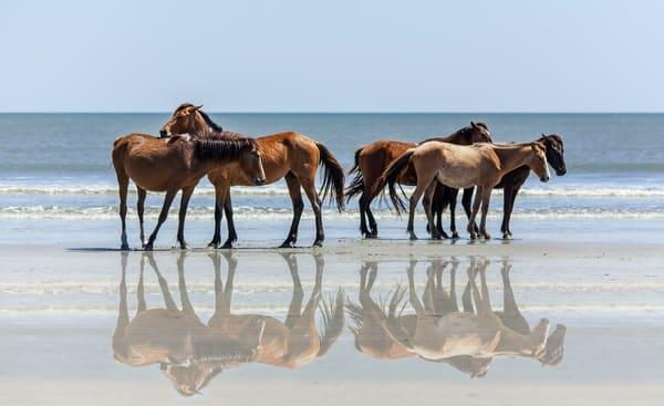 Wild Georgia Horses