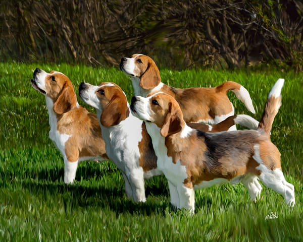 top four beagles